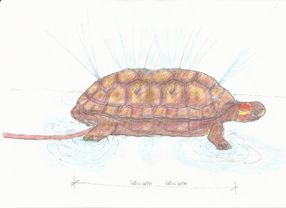Turtle Sprinkler with Color.jpg