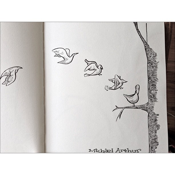 Landing. #birds #livedrawing  #sketchbook #cartoon