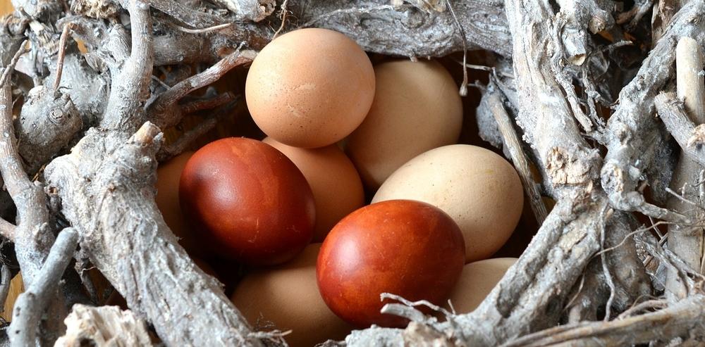 nest egg.jpg