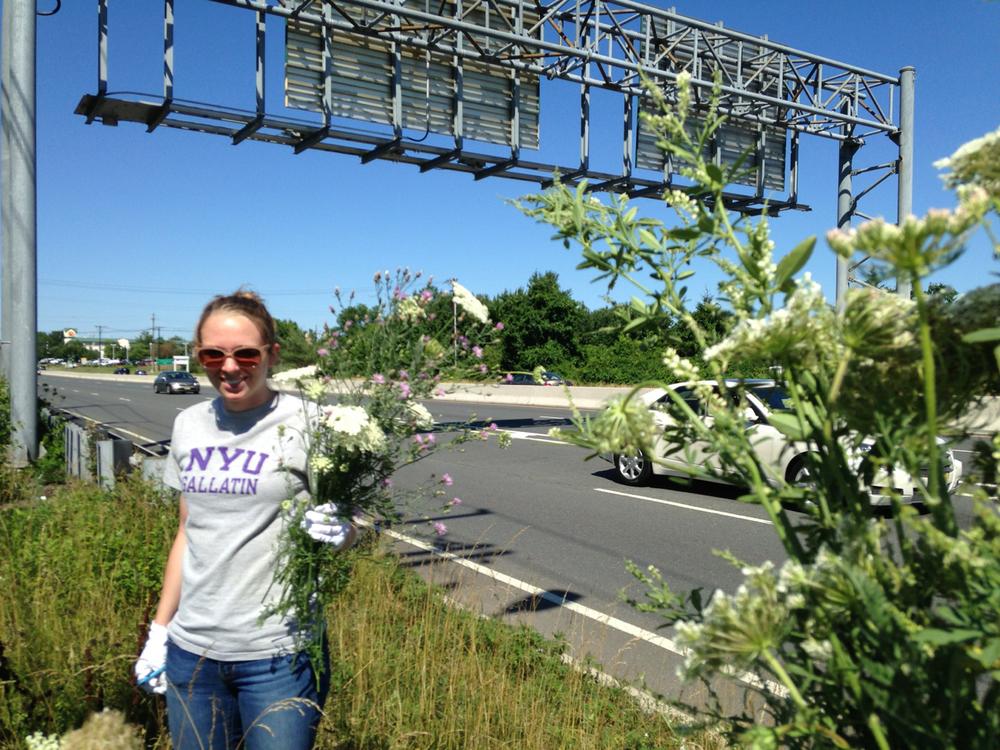 flowers from highway3.jpg