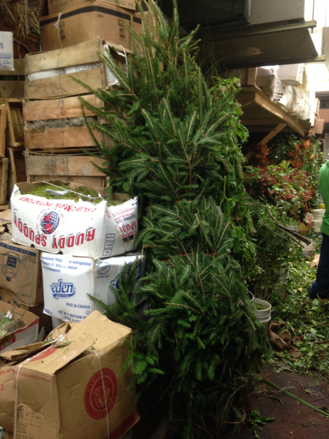 Christmas Tree in August2.jpg