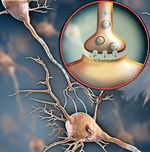 brainreceptor-neurons-connecting-big-bigstock-296x300.jpg