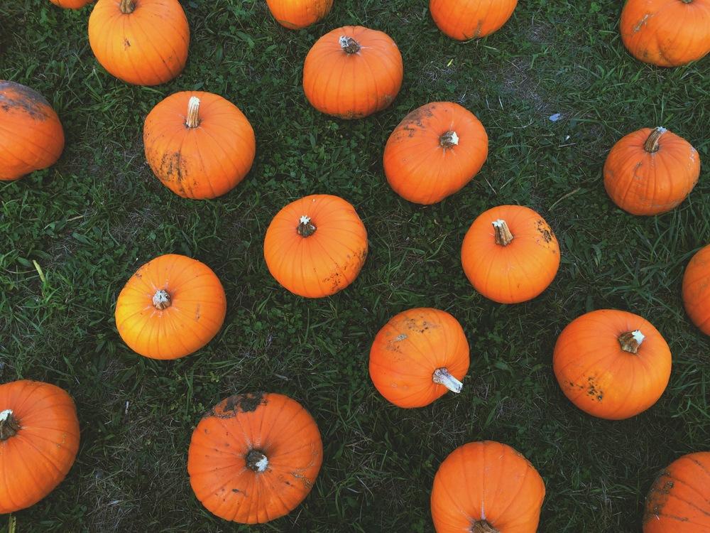 At a pumpkin patch