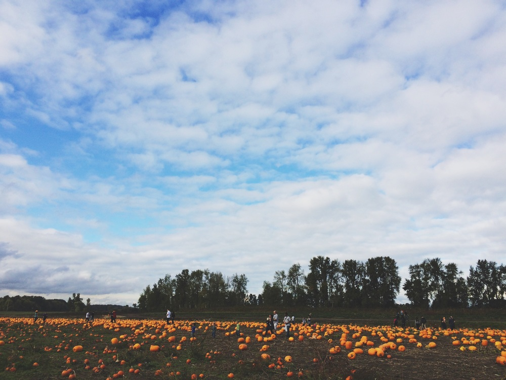 Pumpkin hunting at Sauvie Island