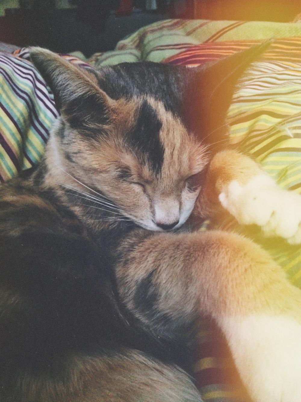 Seriously, just LOOK AT THAT KIKI SLEEPING! ♥♥