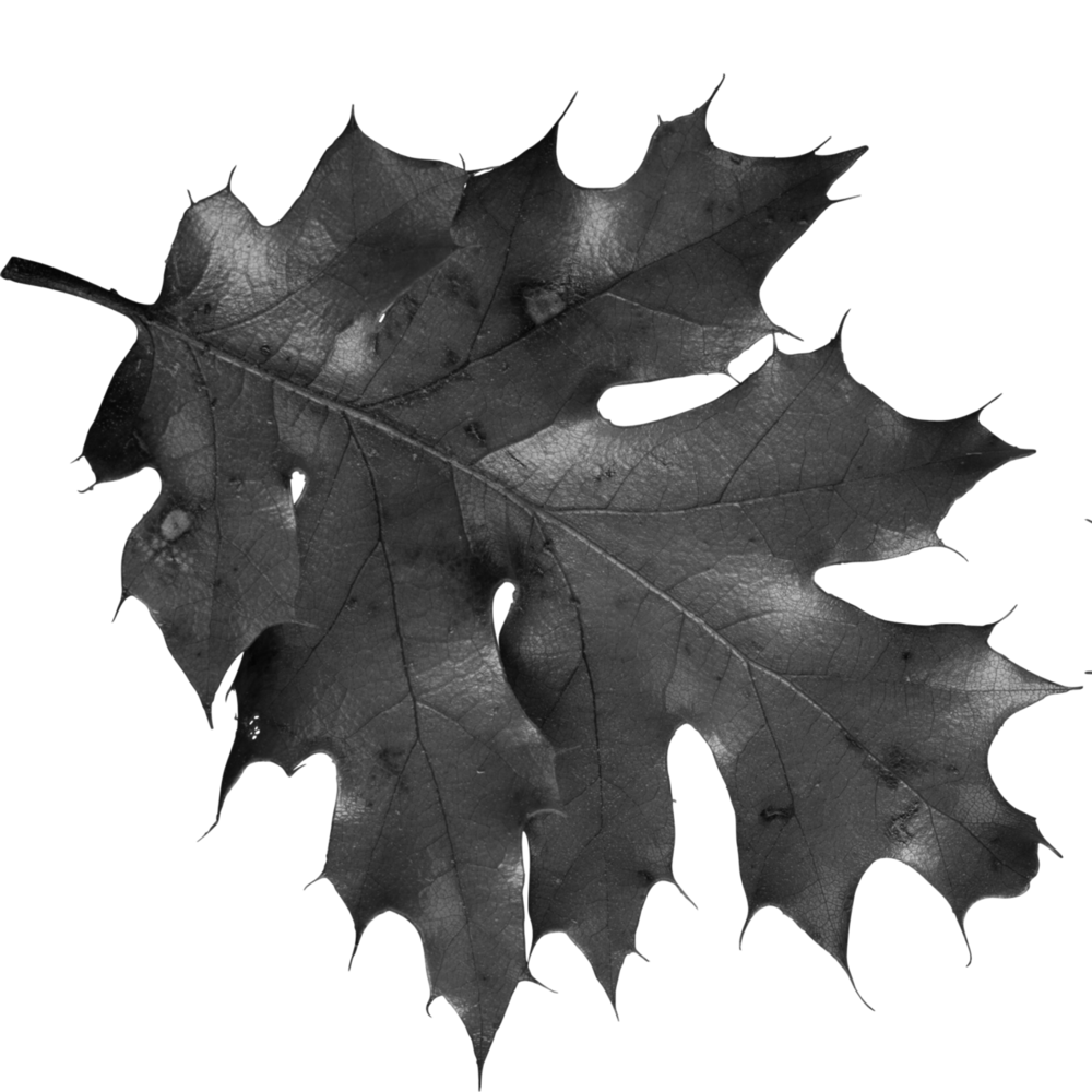 autumn_leaves_PNG3590 copy.png