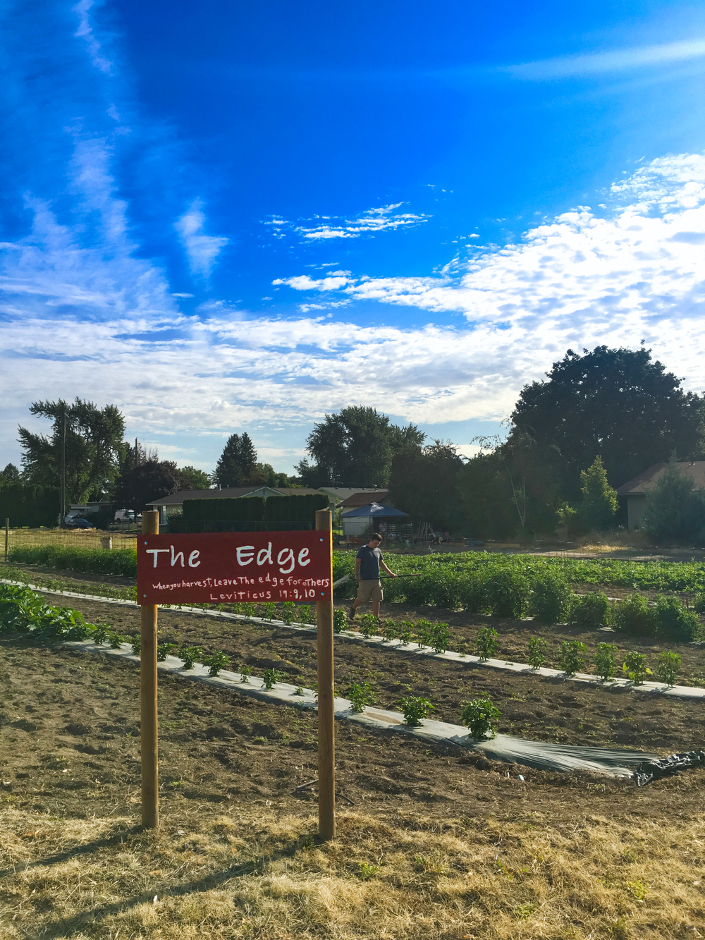 """The Edge"" community garden.  Picture by Kris Loewen"