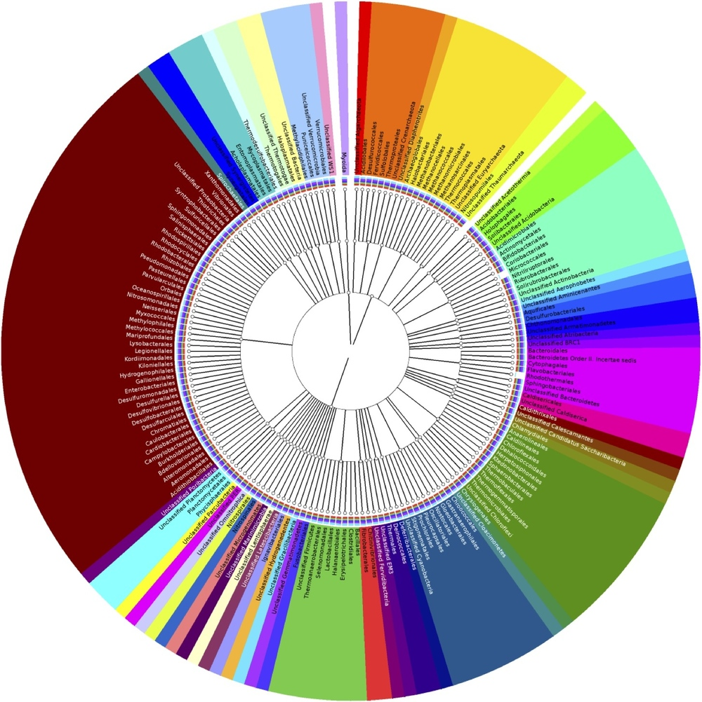 Microbial Community Composition