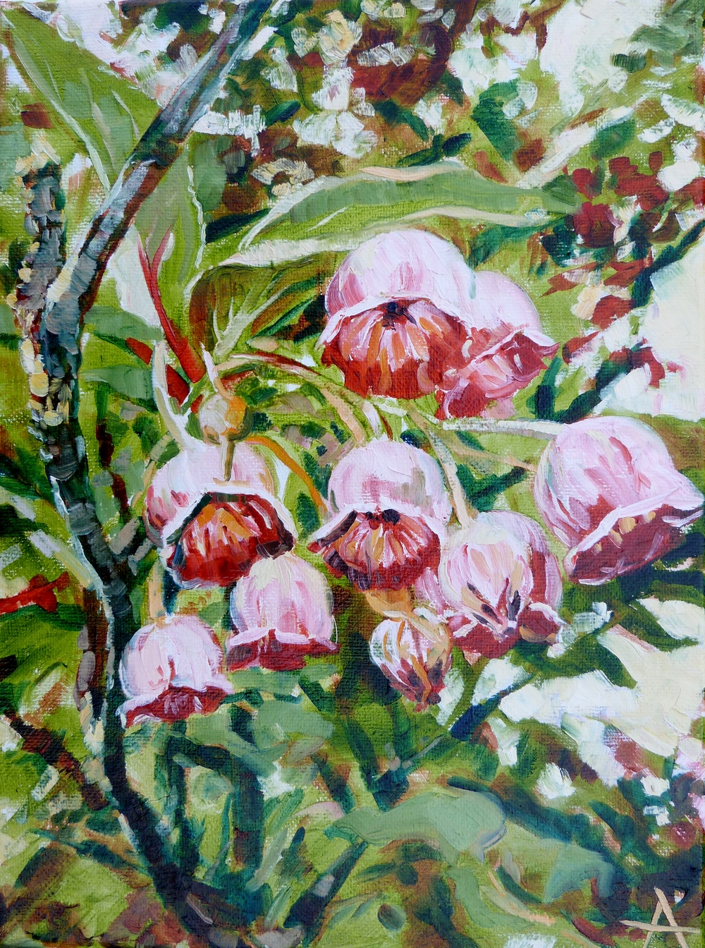 "SOLD, Redvein Enkianthus, Copyright 2014 Hirschten, Oil on Canvas, 9"" x 12"""