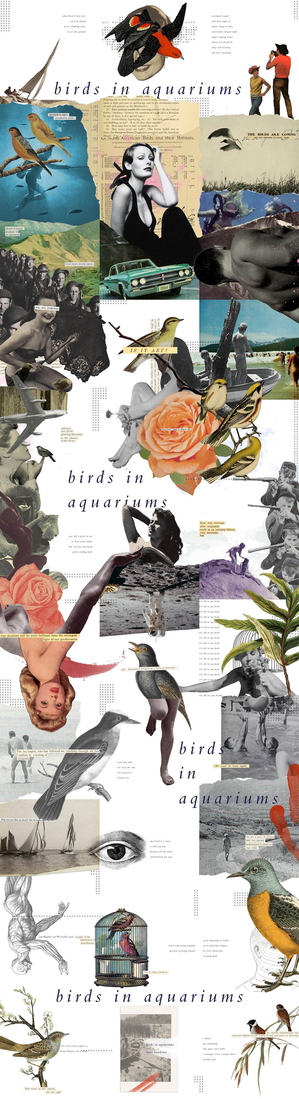 birds-collage-ALL.jpg