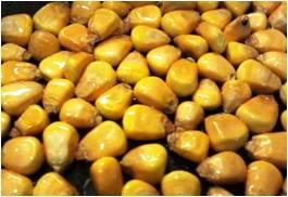 Crunchy parched corn.jpg