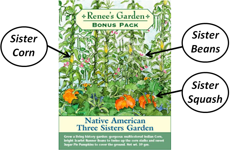 Click to visit the website Renee's Garden, where you can learn to plant your own Three Sisters garden next spring!