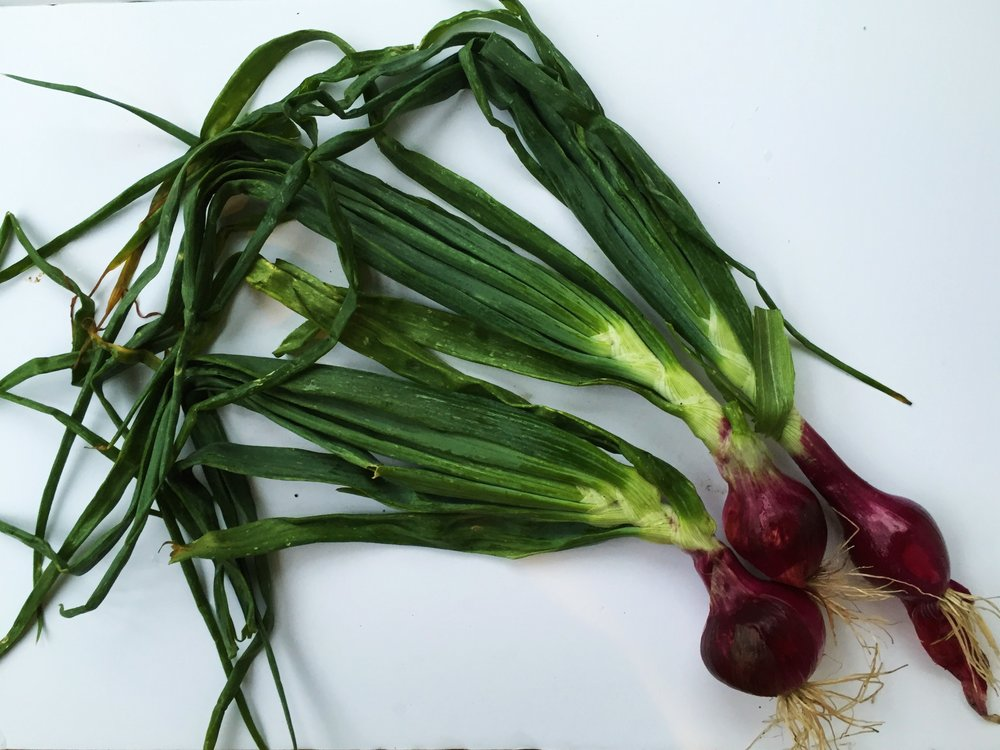 Red spring onions from my CSA.