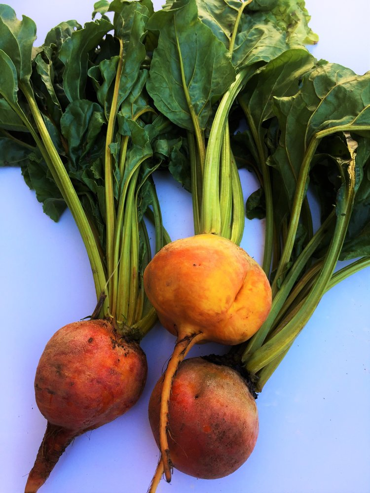 Golden beets with greens from the Montclair Farmers' Market