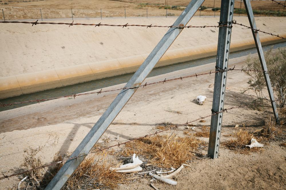 bones barbed wire