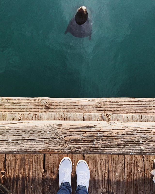 We moved 4 weeks ago, but it's just now hitting me that we're back in California. ☀️🌊 So, now commencing sunny, ocean pictures till the mountains call us home! #fromwherenatstands #morrobay #centralcoast #california #morrobayharbor #wildlife #fromwhereistand #vscocam