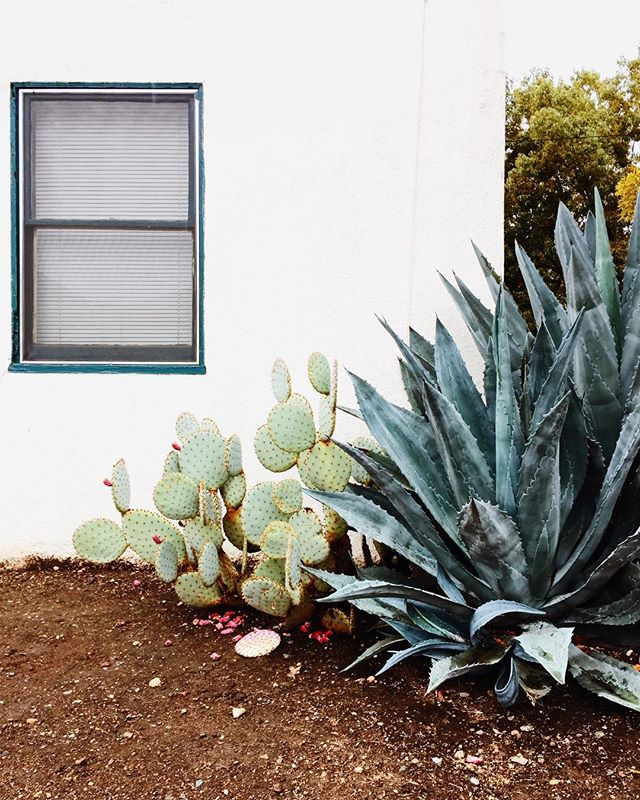 Hey neighbor, I like your plants. 😍 #cacti #succulentlove #vscocam