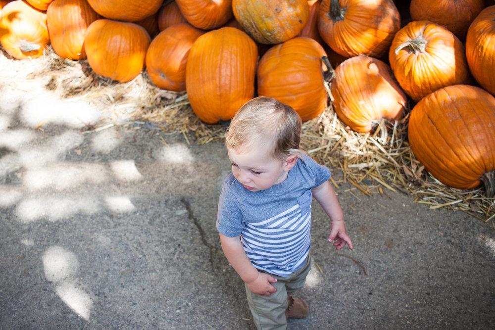pumpkins18.jpg