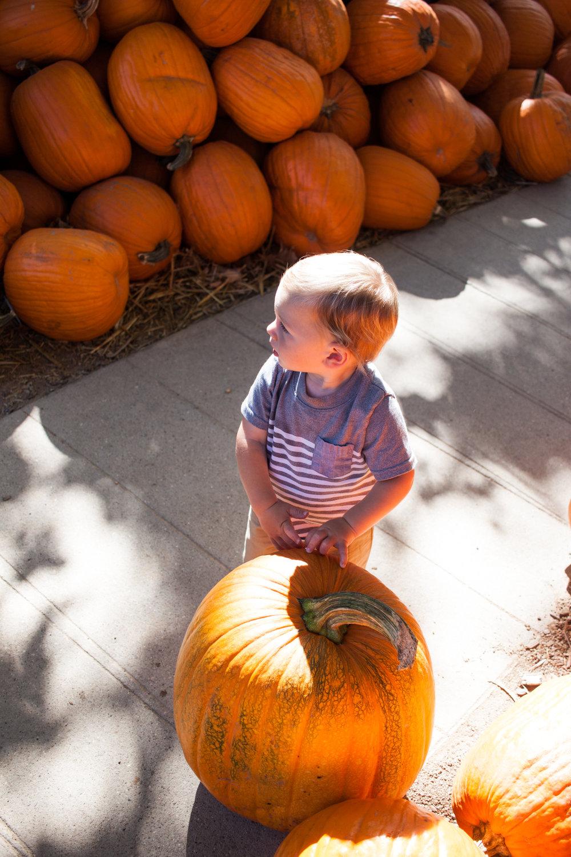 pumpkins18-18.jpg