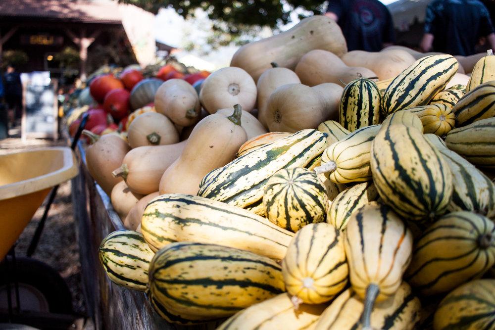 pumpkins18-23.jpg