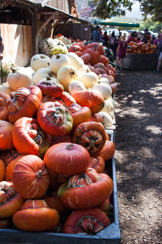 pumpkins18-29.jpg