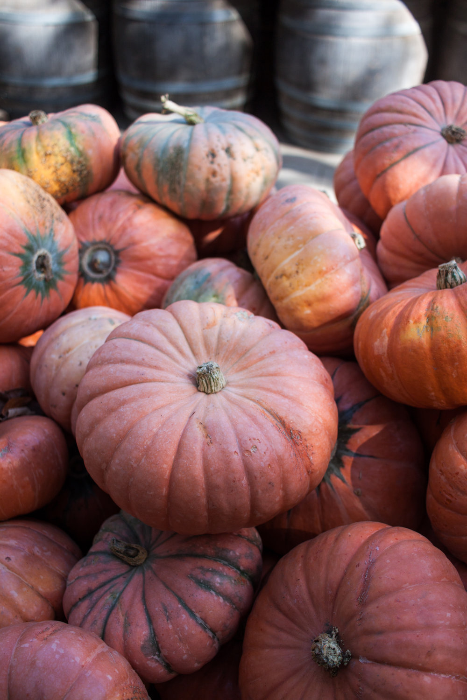 pumpkins18-31.jpg