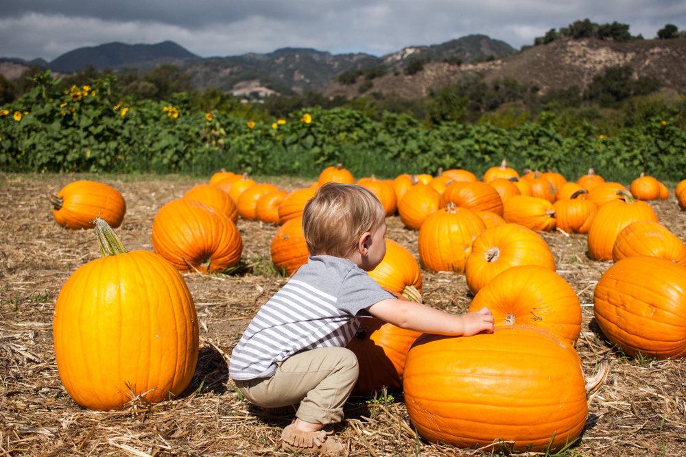 pumpkins18-42.jpg