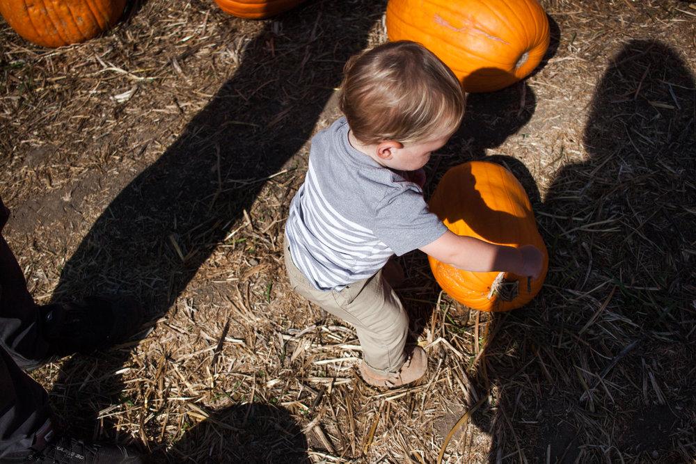 pumpkins18-76.jpg