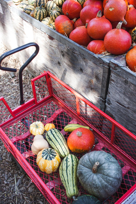 pumpkins18-181.jpg