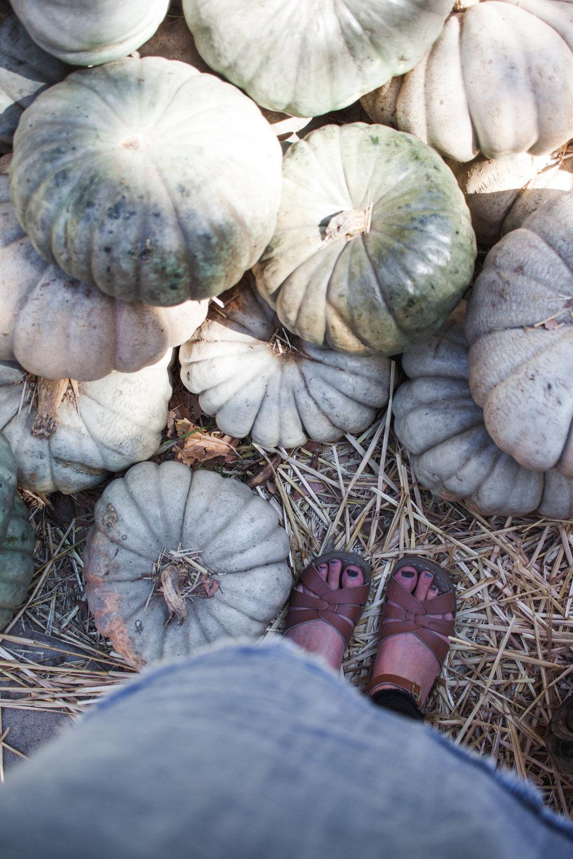 pumpkins18-170.jpg