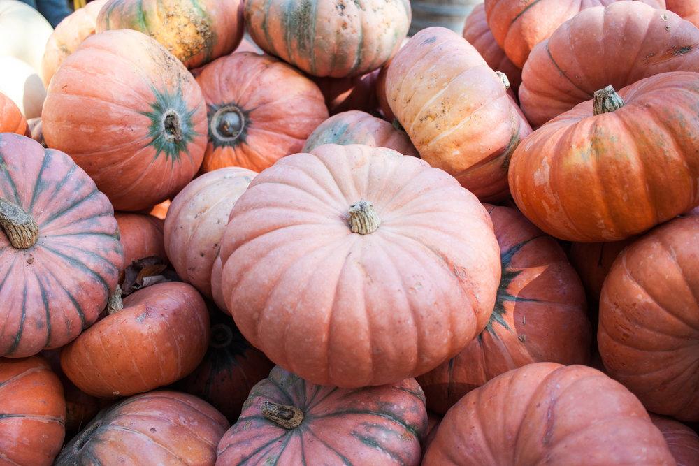 pumpkins18-32.jpg
