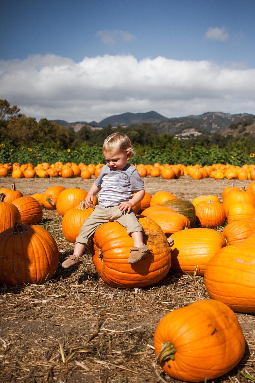 pumpkins18-74.jpg