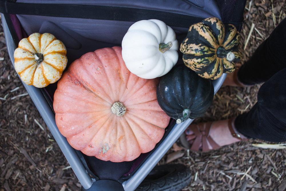 pumpkins18-186.jpg