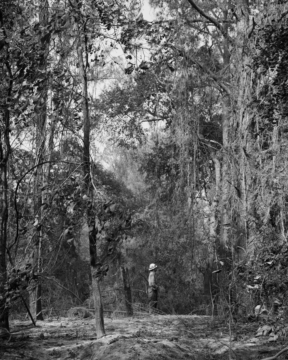 Bastrop_Fire_Forestworker_forest_.jpg