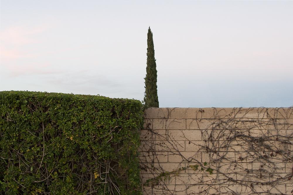 _tree wall.jpg