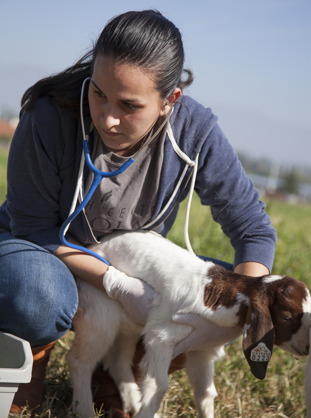 Georgina Martinez checks the heartbeat of baby goat #223 during a routine physical exam at the Pierce farm on Friday, march 20, 2015. Baby goat #223 was born blind. Woodland Hills, Calif.  Read the full story  here