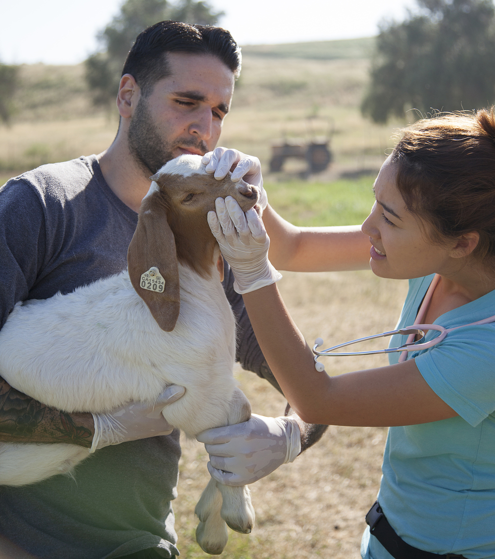 Ben Singh carries a baby goat while Yuri Foreman checks its teeth and gums during a physical exam at the Pierce farm on Friday, March 20, 2015. Woodland Hills, Calif.  Read the full story  here