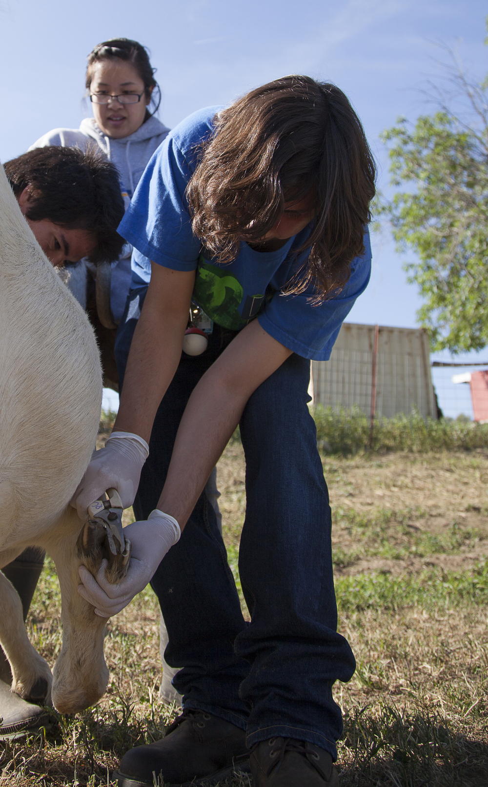 Pre-vet major Ivan Barraza clips and trims the hoof of Flag, the goat, during a routine physical examination at the Pierce farm on Friday, March 20, 2015. Woodland Hills, Calif.  Read the full story  here
