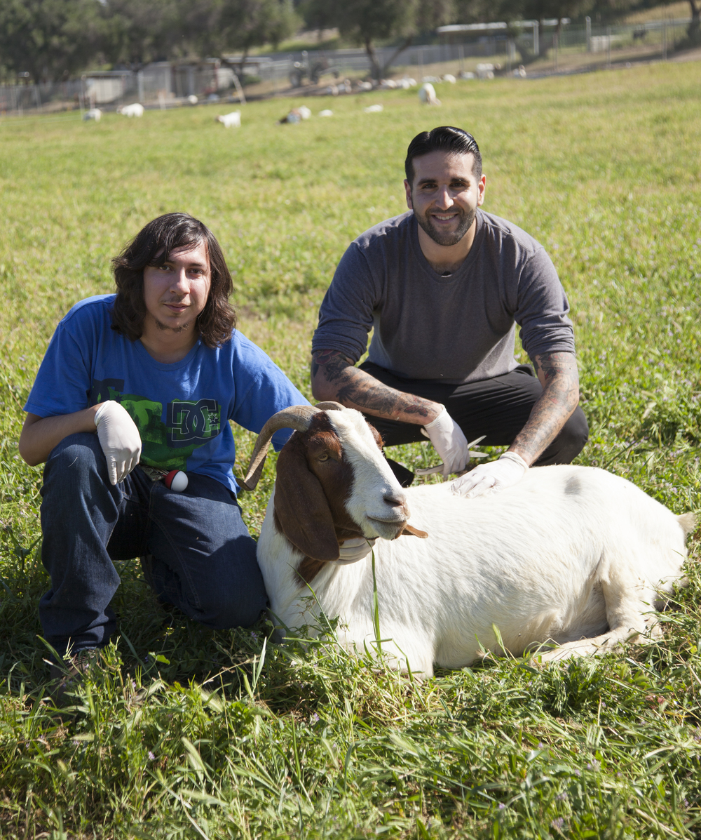 Ivan Barraza and Ben Singh pose for a photo with Flag, the goat, at the Pierce farm on Friday, March 20, 2015. Woodland Hills, Calif.  Read the full story here