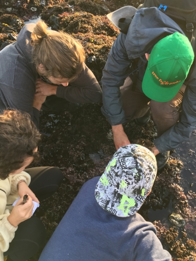 TFT naturalists revealing hidden tide pool creatures!