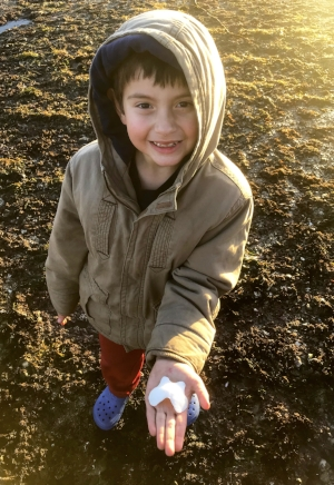 A young chiton enthusiast finds his first shell plate from the largest of all chitons- the (edible) Gumboot!