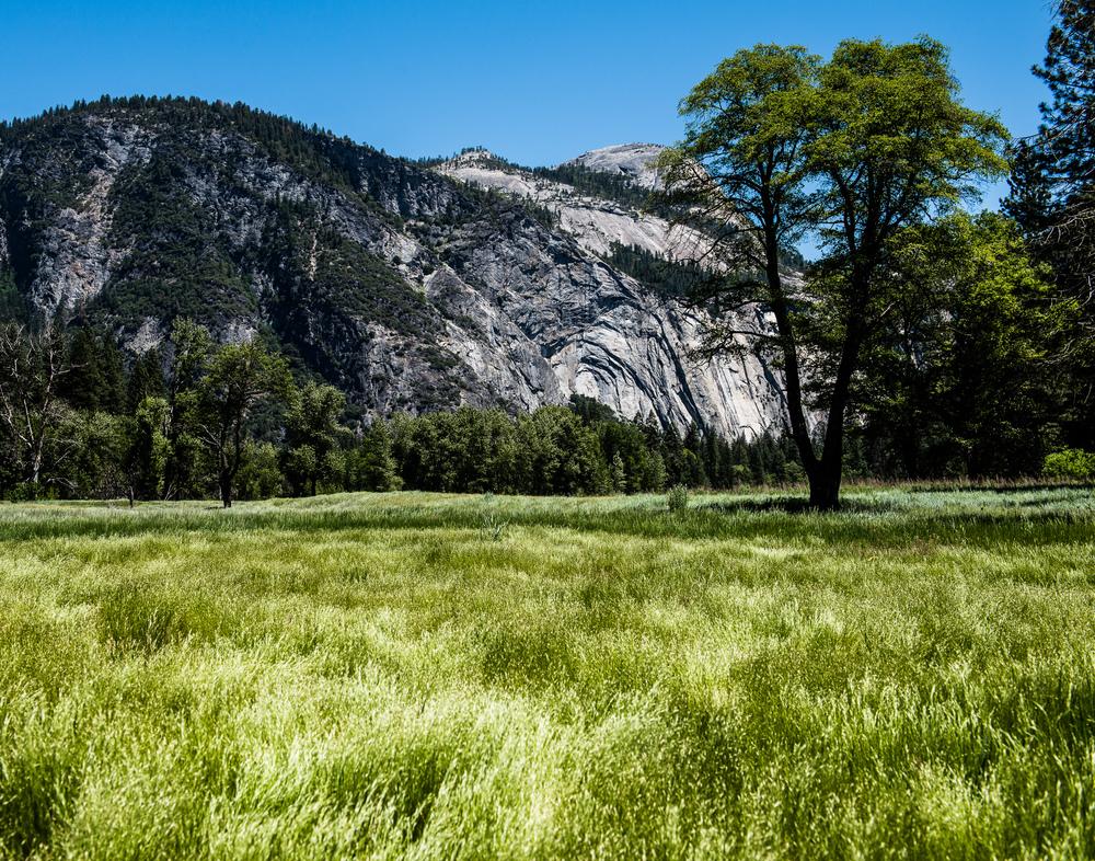 Landscape_Mediate-6.jpg