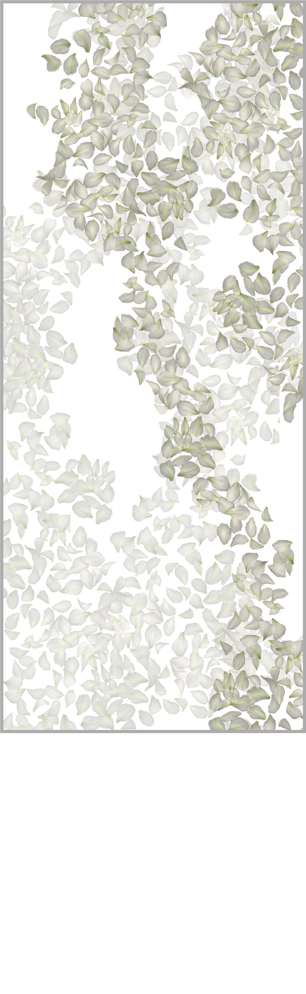 leaf_white.jpg