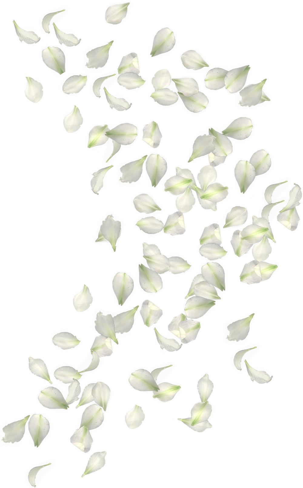 falling petals.jpg
