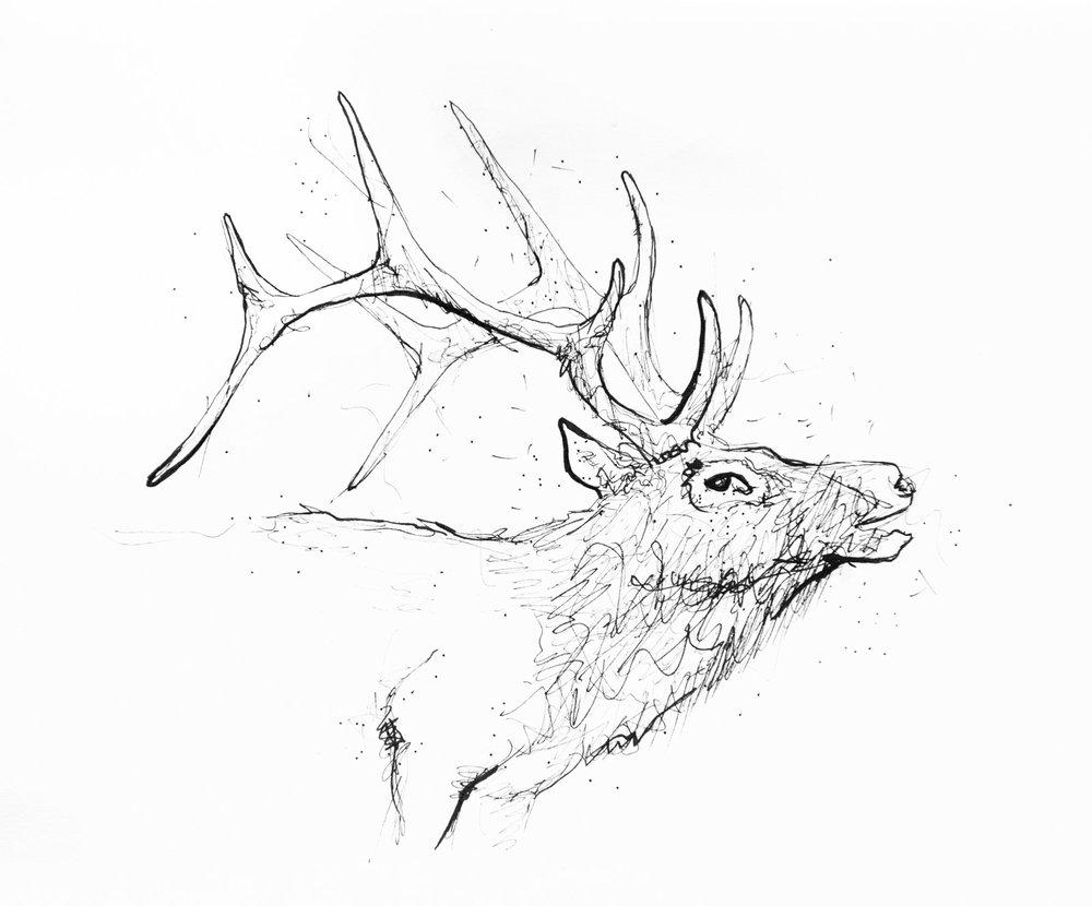animalSketches-3.jpg