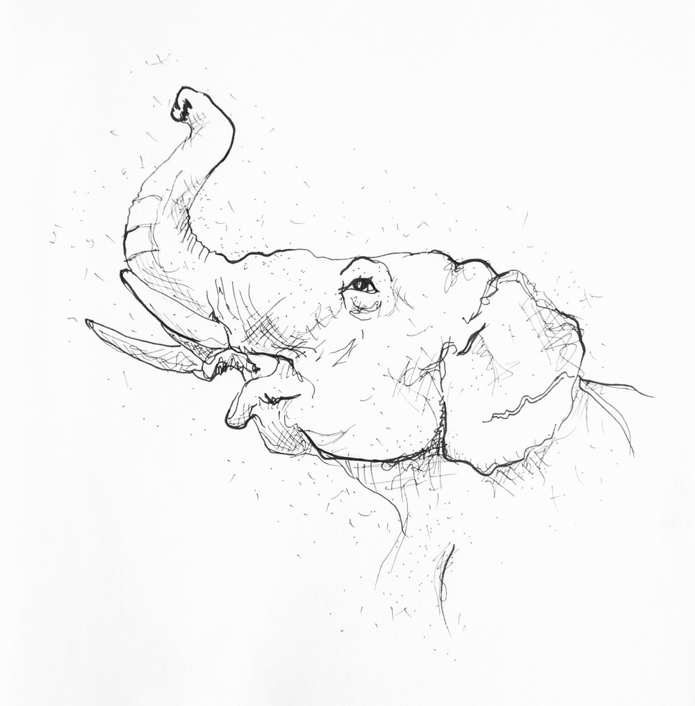 animalSketches.jpg