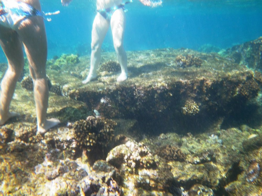tourists on coral reef.jpg