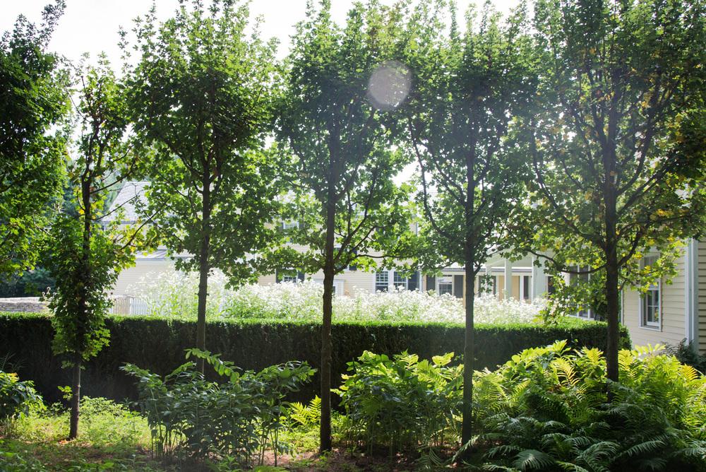 John de Lellis Gardens 813.jpg