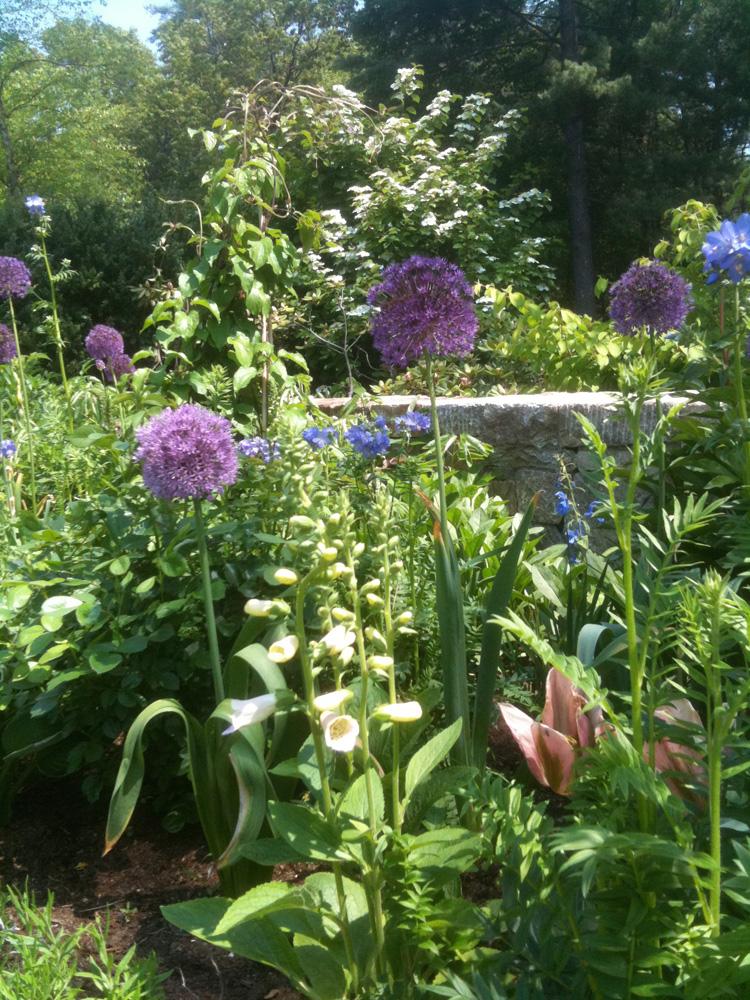 John de Lellis Gardens 1129.jpg