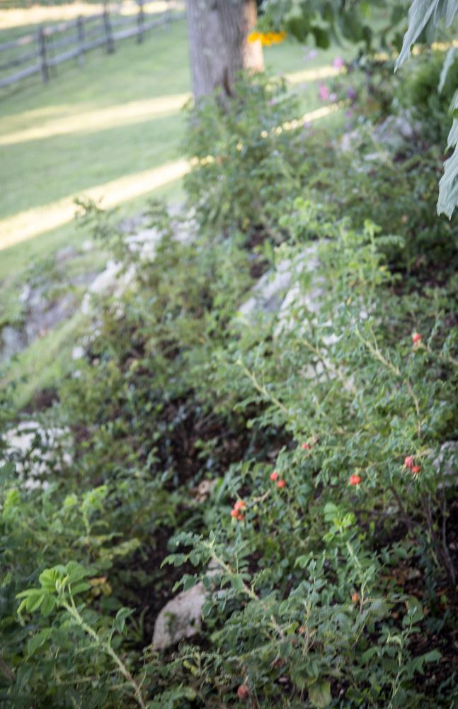 John de Lellis Gardens 1212.jpg
